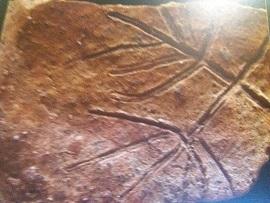 Scrierea neolitică dunăreană. Simbolul Pomului Vieţii. mostenireculturala.com
